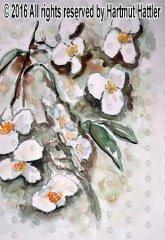 0067_Blumen.jpg